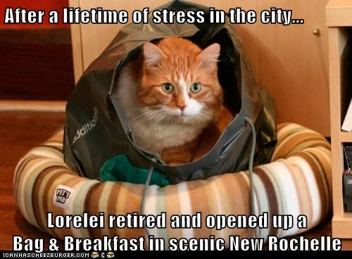 After a lifetime of stress in the city...  Lorelei retired and opened up a                   Bag & Breakfast in scenic New Rochelle