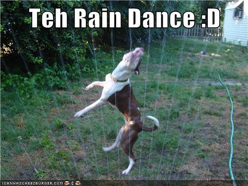 dogs,lawn,Rain Dance,sprinkler,what breed