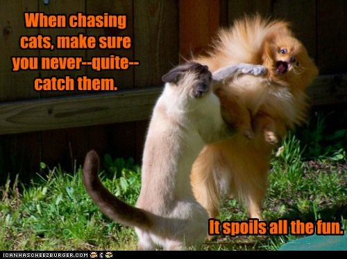 When chasing cats, make sure you never--quite--catch them.