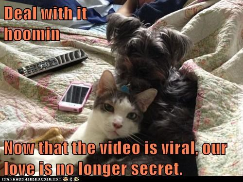 captions,Cats,dogs,inter species,love,romance,secret,Video,viral