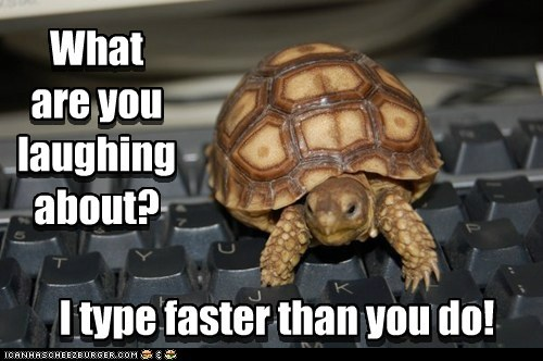 faster,laughing,slow,turtle,typing