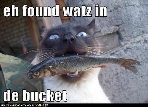 eh found watz in   de bucket