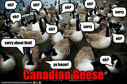 Animal Capshunz: Canadian Geese, eh?