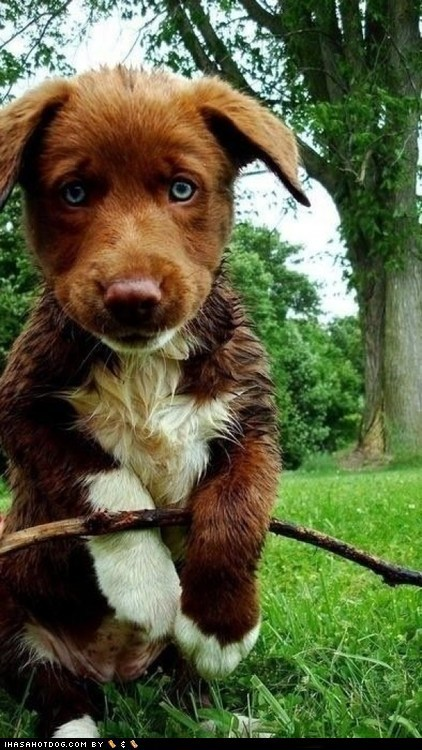 Cyoot Puppy ob teh Day: Big Blue Eyes