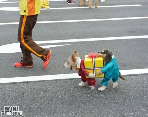 WIN!: Doggie Costume WIN