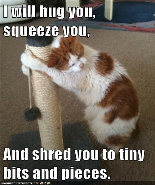 Lolcats: I will hug you, squeeze you...