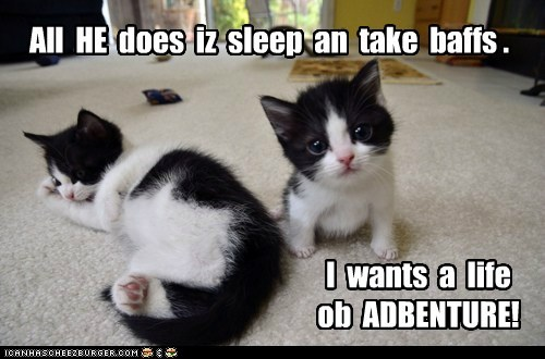 Lolcats: All  HE  does  iz  sleep  an  take  baffs .