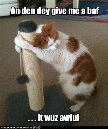 cat tree,depressed,cry,captions,comfort,bath,Cats,awful
