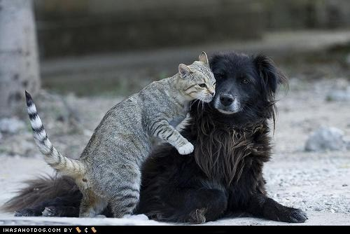 cat,cuddle,dogs,kittehs r owr friends,rubs,what breed