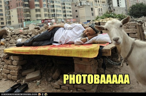 animals,goat,photobomb,political pictures