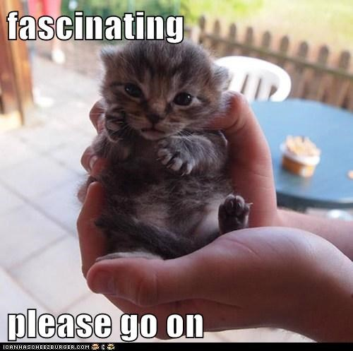 Lolcats: Yes, Quite.