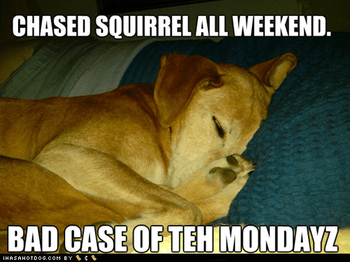 Case Of The Mondays,dogs,mondays,sleepy,squirrels,what breed