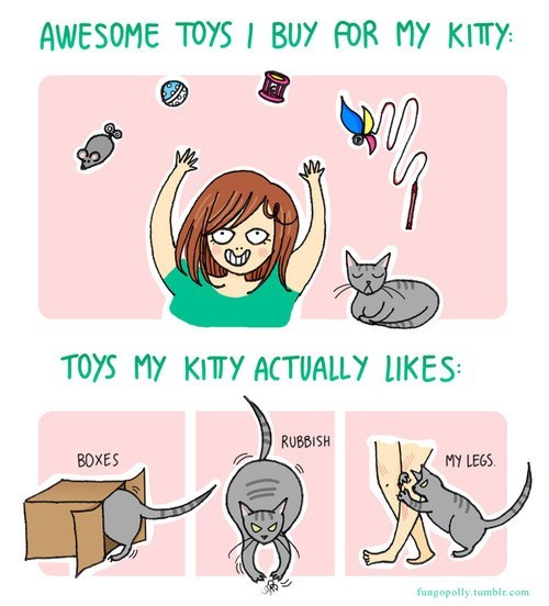 Kitties Enjoy the Simple Things Life Has to Offer