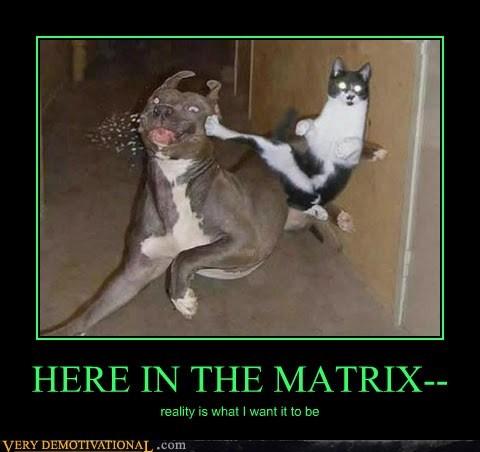 cat,dogs,matrix,reality