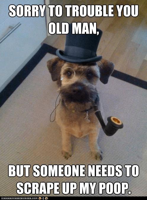 dogs,fancy,gentleman dog,Memes,monocles,pipes,poop,sir,top hats