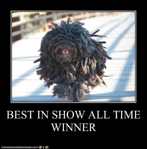 BEST IN SHOW ALL TIME WINNER