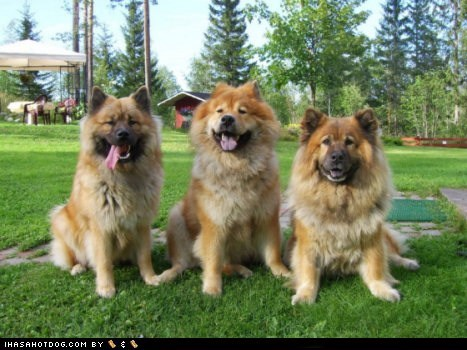 Goggie ob teh Week: Smiling Trio