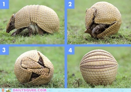 armadillo,ball,How To,instructional,rolling,squee spree
