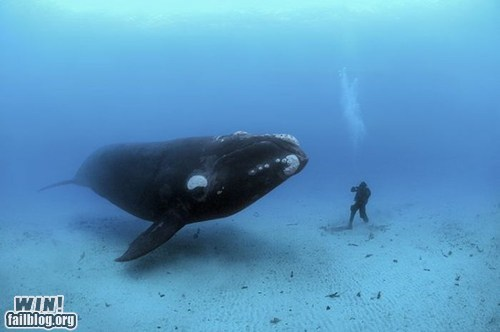 Meeting a Whale WIN