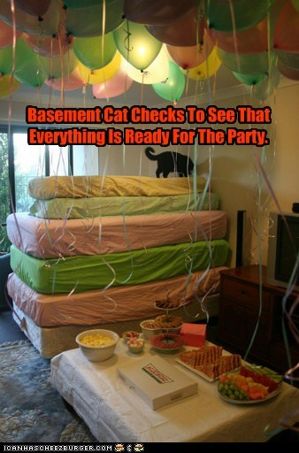 Basement Cat Checks To See That Everything Is Ready For The Party.