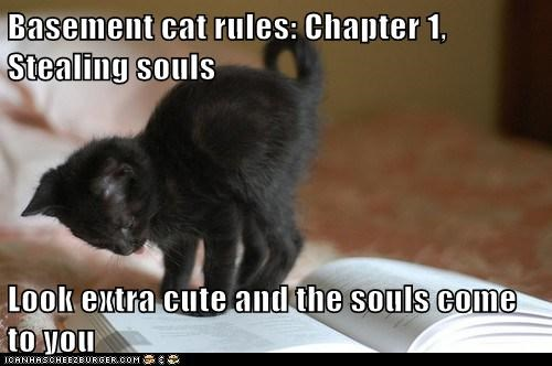 Basement cat rules: Chapter 1, Stealing souls  Look extra cute and the souls come to you