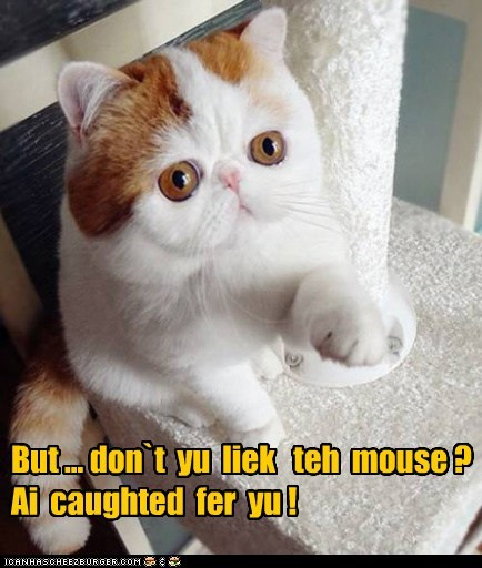 But ... don`t  yu  liek   teh  mouse ?   Ai  caughted  fer  yu !