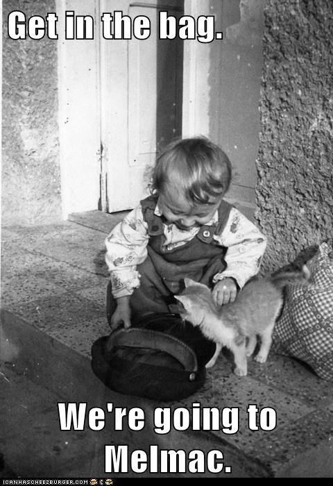 Alf,cat,hat,kid,kitten,lure