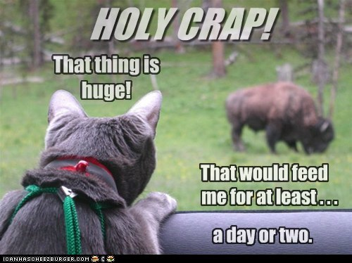 bison,buffalo,captions,Cats,dinner,eat,feed,noms
