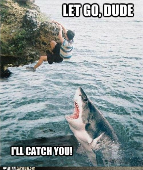 captions,catch,cliff,eating,hanging,hungry,let go,shark,trust
