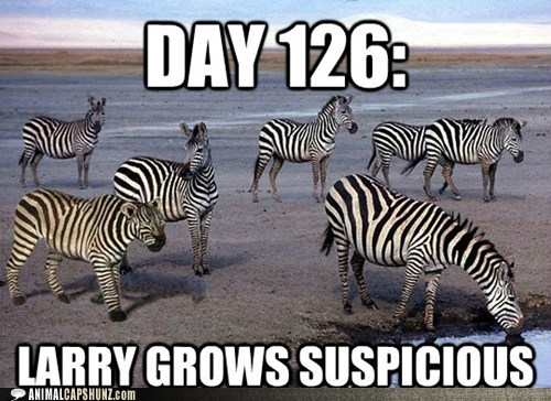 captions,disguise,hunting,larry,lion,suspicious,water,zebras