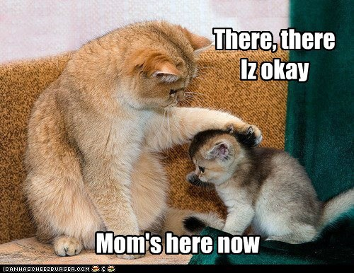 captions,Cats,child,comfort,kitten,mom,mother,there there