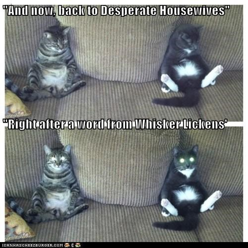 """And now, back to Desperate Housewives""   ""Right after a word from Whisker Lickens'"