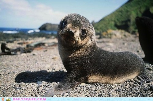 Sandy Seal Pup
