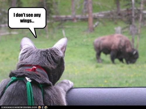bar,buffalo,buffalo wings,cat,confused,food,lied