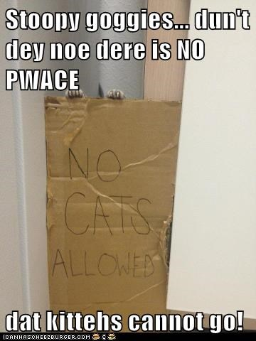 Stoopy goggies... dun't dey noe dere is NO PWACE  dat kittehs cannot go!