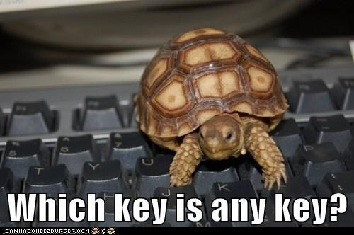 any key,confused,keyboard,slow,turtle,typing
