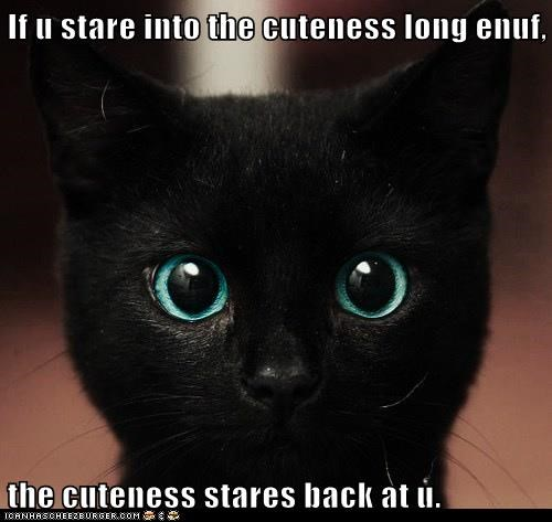 If u stare into the cuteness long enuf,  the cuteness stares back at u.