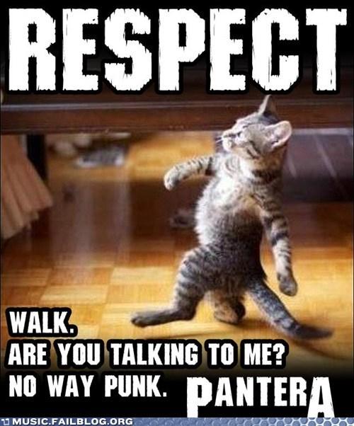 Walk On Home Cat
