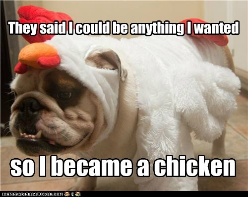 bulldog,chicken,costume,dogs,they said i could be anything