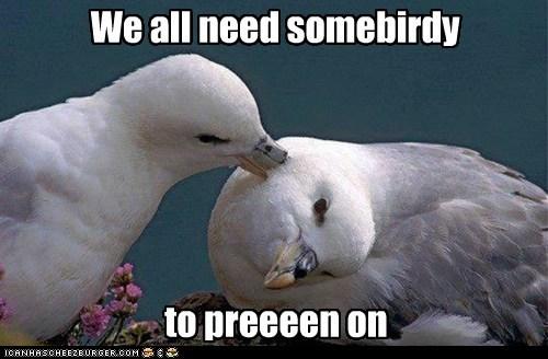 birds,captions,lean on me,preening,pun,seagulls,song