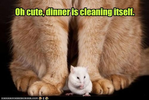 captions,Cats,clean,cute,dinner,mouse