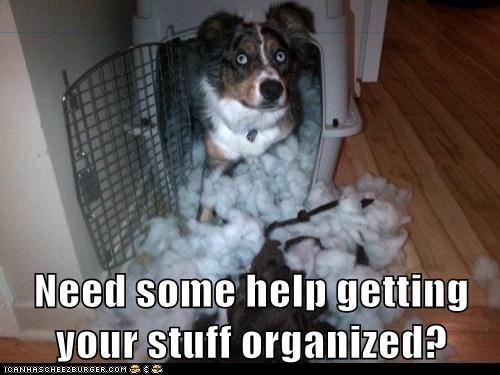 australian shepherd,cotton balls,dogs,dog carrier,mess,organizer