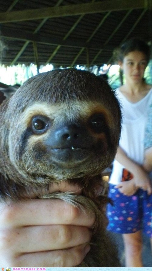 Baby sloth in Peru!