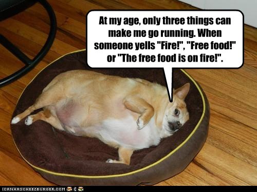 chihuahua,dogs,fat,fire,priorities