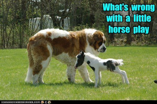 What's  wrong  with  a  little  horse  play