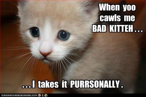 When  yoo  cawls  me   BAD  KITTEH . . .