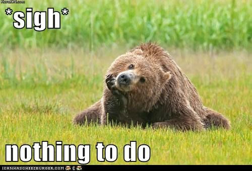 Animal Capshunz: It's Hard Out There For a Bear