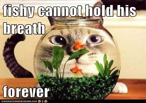 underwater,wait,oxygen,water,patience,captions,breath,fish,Cats