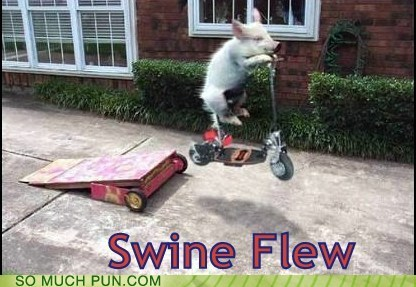double meaning,flew,flu,homophone,literalism,pig,shoop,swine,swine flu