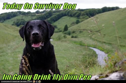 Today On Survivor Dog  Im Going Drink My Own Pee